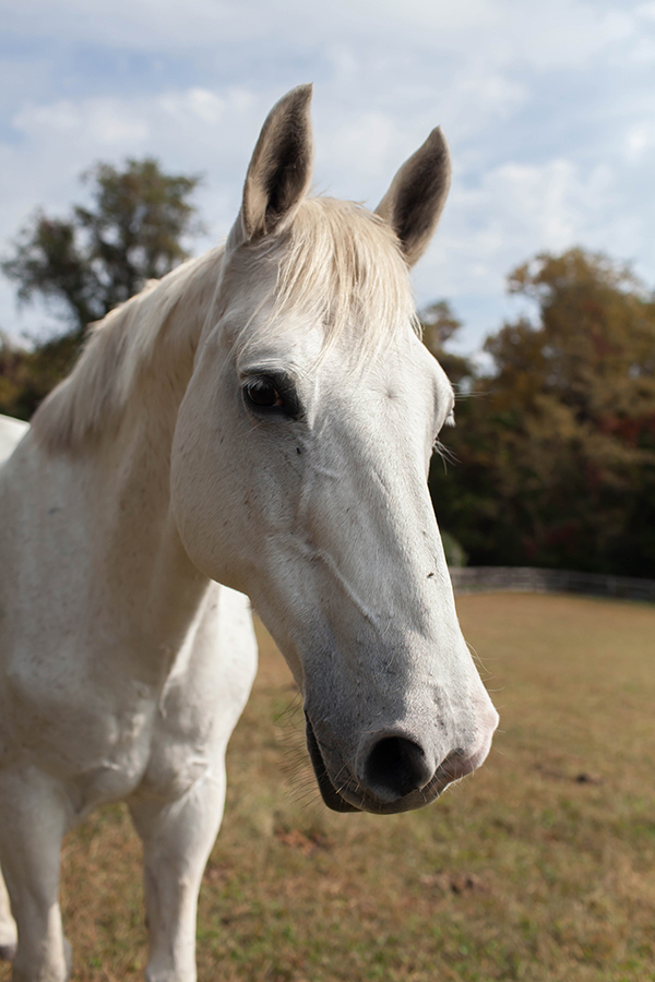 Meet Our Horses | Grid Iron Hill Farm